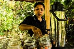 Plantacja kawy (20)