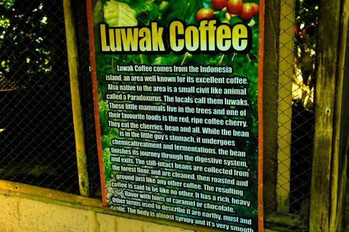 Plantacja kawy (3)