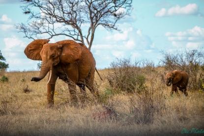 czerwona słonica z dzieckiem