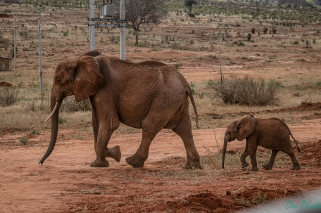 czarna słonica z dzieckiem